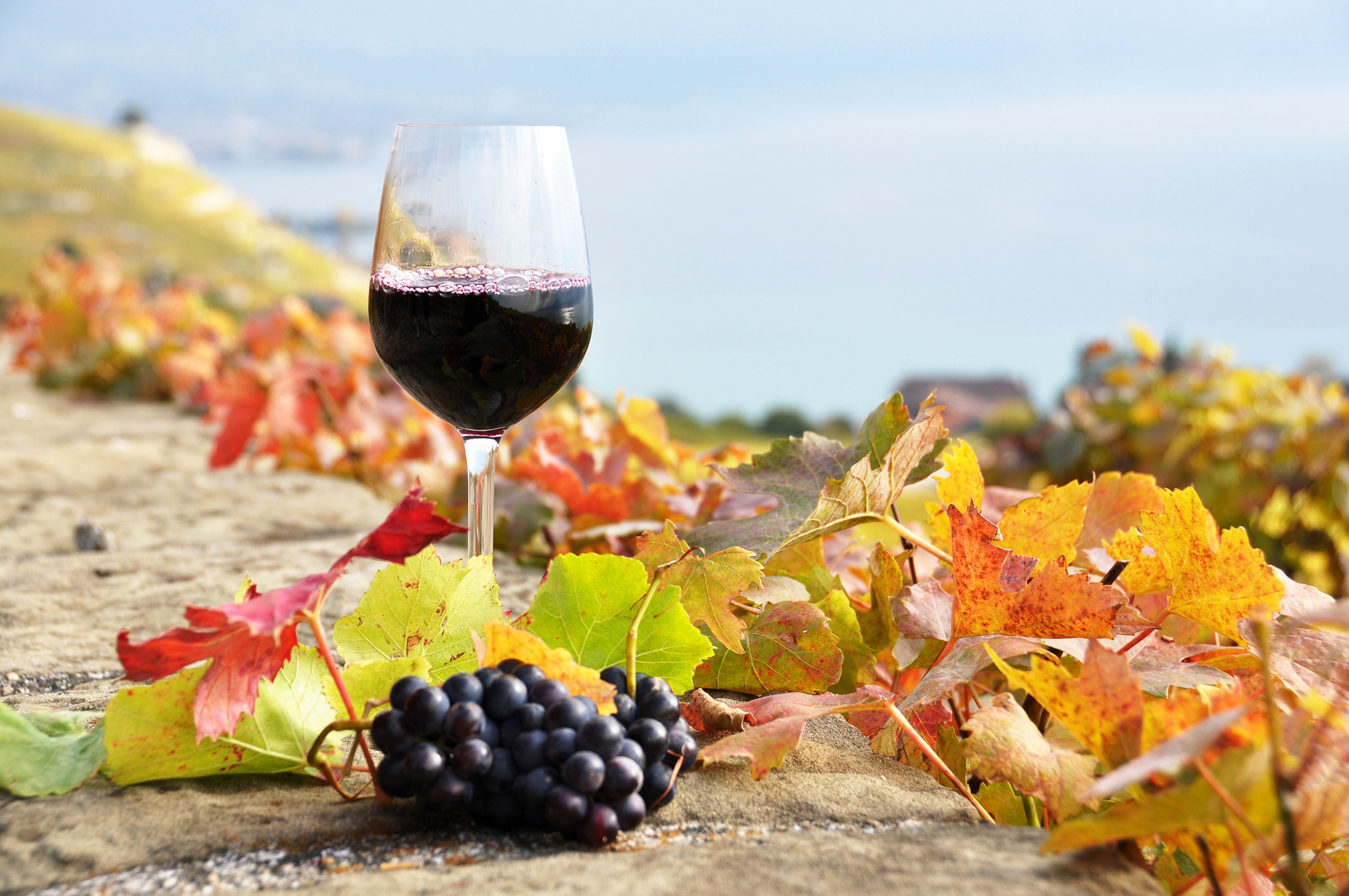 Vinogradništvo in sadjarstvo