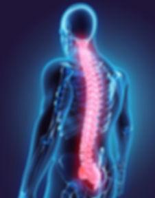 Spine Shutterstock.jpg