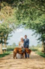 wedding pony