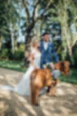 pony hire weddings london