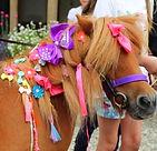 unicorn party london pony hire pony parties london pony parties essex pony parties norfolk pony parties hertfordshire pony hire unicorn parties pony school visits tiny tots riding lessons Gemma Collins met Cambridge Shetland Ponies