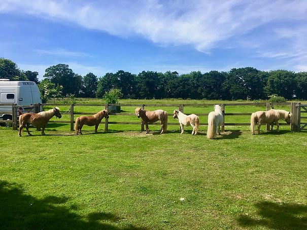 pony party london