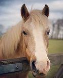 pony parties essex