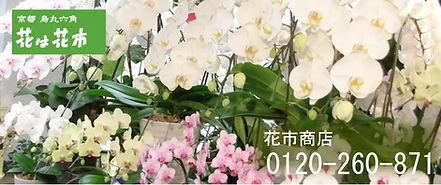 花は花市.jpg