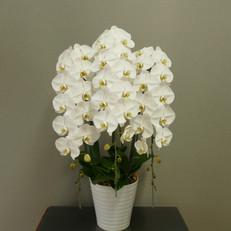 ②3F白10~11輪開花