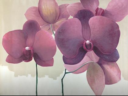 Orchids by Houman Pazouki