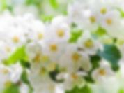 Massage aux fleurs de Bach