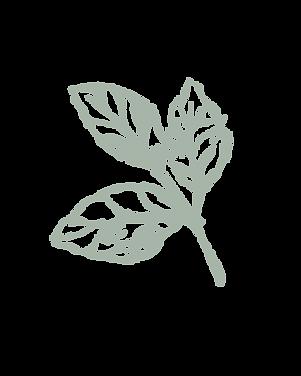 HB Green Leaf.png