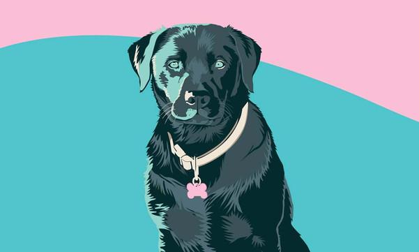 Daisy Dog Portrait