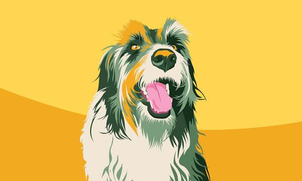 Albus Dog Portrait