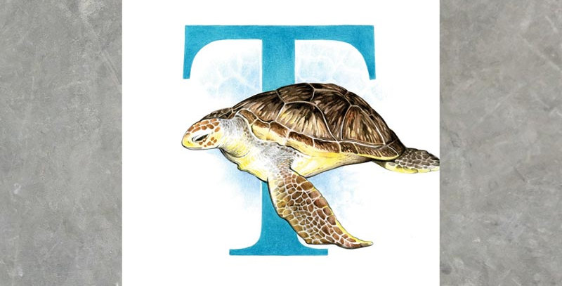 T For Turtle - Print