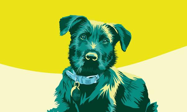 Ava Dog Portrait