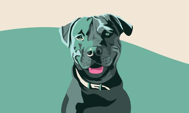 Boss Dog Portrait