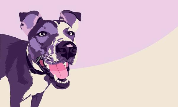 Chase Dog Portrait