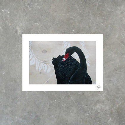 Black Swan - Print