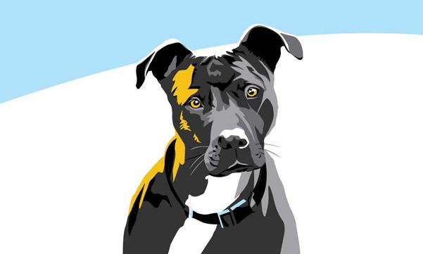 Rogue Dog Portrait