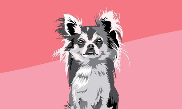 Pippin Dog Portrait