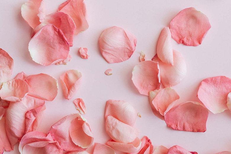 Rose-BG.jpg