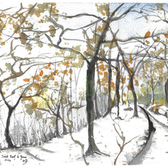 forêt de st paul.jpg
