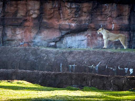 caldwell zoo take two