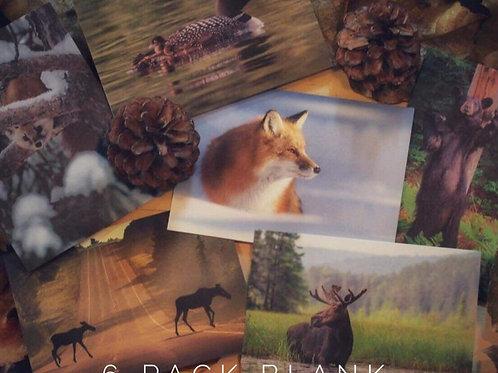 Algonquin Wildlife Cards