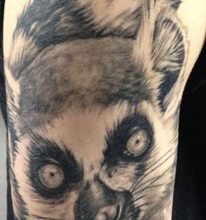 lemur51514.jpg