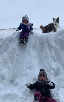 Our Border Collies LOVE Winter
