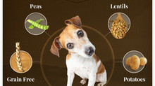 Dog Food Reviews 2021