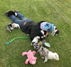 Puppy Culture work