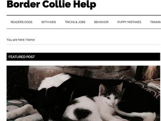 A Border Collie Blog . . .