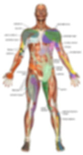 massage therapy points second image.jpg