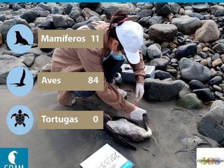 MONITOREO DE PLAYAS ABRIL 2021
