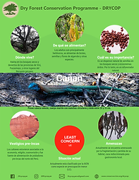 infografia_cañan2.png