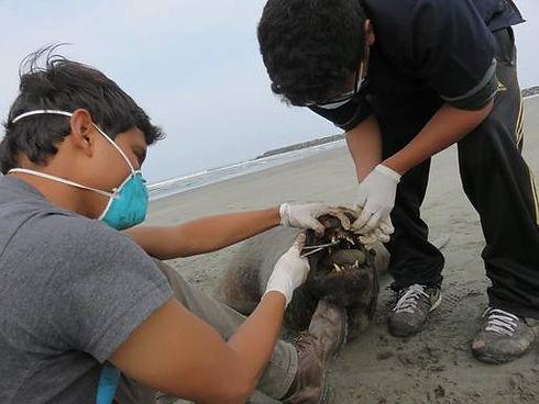 veterinario-alejandro-pereda-analisando-