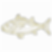 fish outline_edited.png