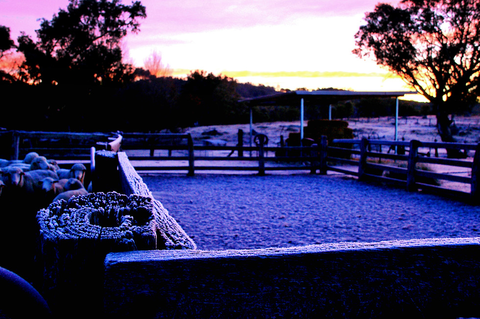yards-frost.jpg