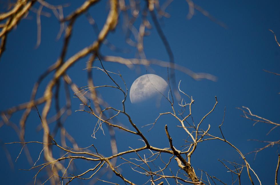 Day Moon.jpg