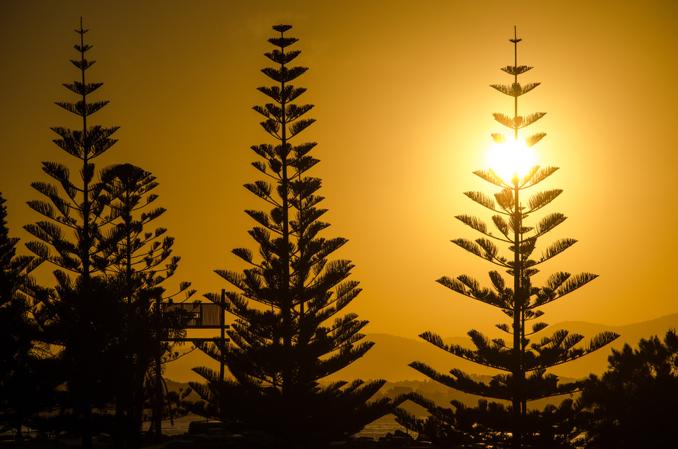Sunset Behind the Pines.jpg