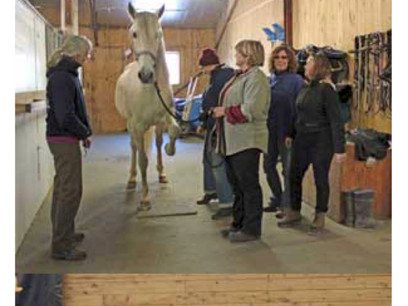 Cavalia Click That Teaches Clicker Clinic