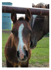 A Happy Ending For Bruce, The Rescue Foal