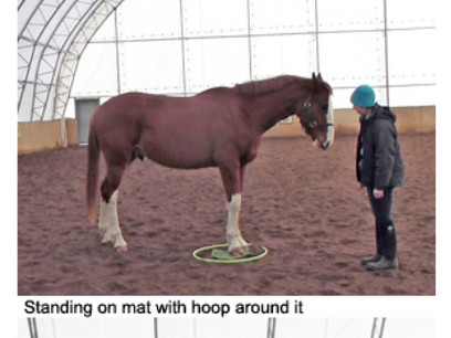 Mats and Horse Agility