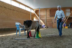 Playing With Horse Agility