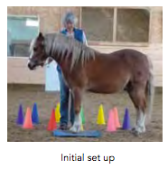Teaching Your Horse To Lunge