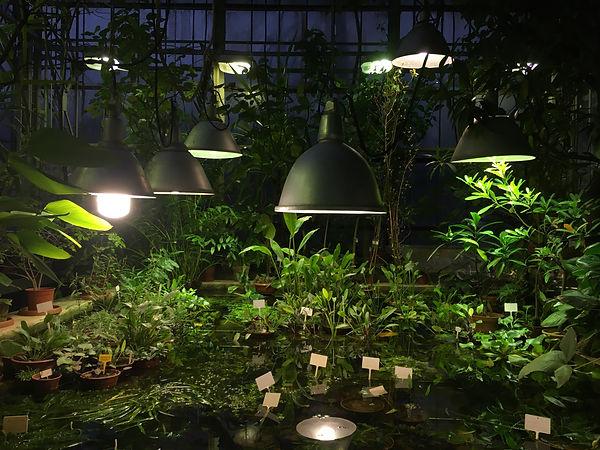 9 life of plants.JPG