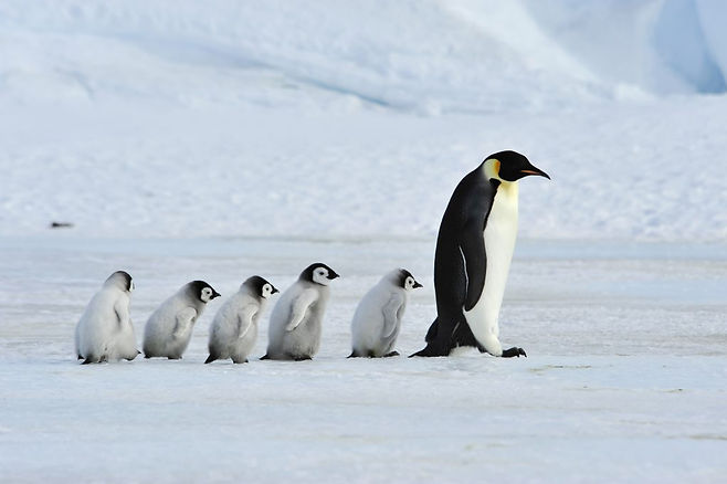 pinguine-1024x681.jpg