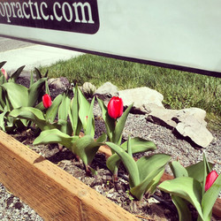 Spring at the clinic