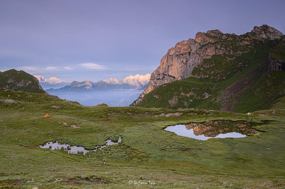 La zona palustre del lago delle Baste ... Ops, Cernera vanitoso