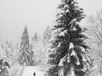 Bianco Vertigo