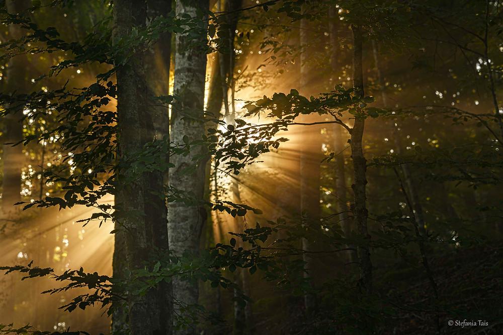 Alba nella foresta del Cansiglio
