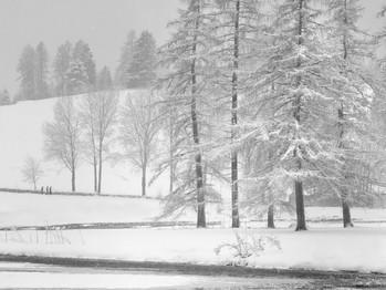 Echi di neve